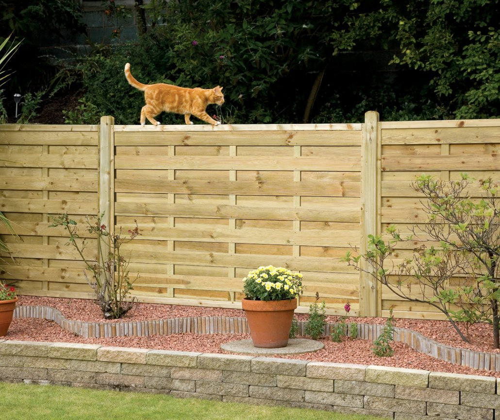 A photo of a ginger cat walking along the top of a new fence