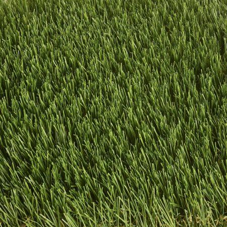 Bembridge Artificial Grass – GrassMate