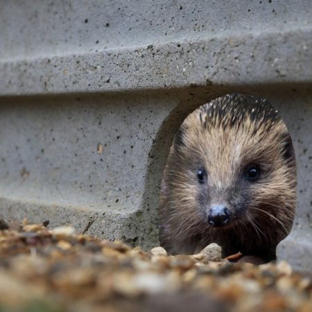 Hedgehog Friendly Concrete Gravel Board
