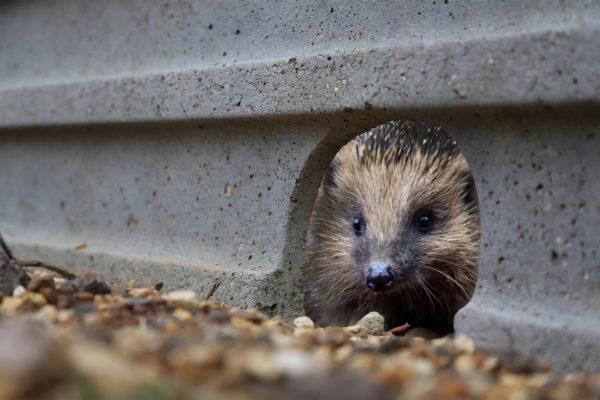 Hedgehog Friendly Concrete Gravel Board